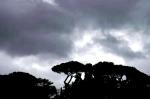 Sky Rome Tiber