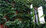 Vine Covered Wall France