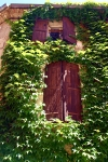 Shutters Stone House Vines France