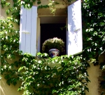 Blue Shutters Vines France
